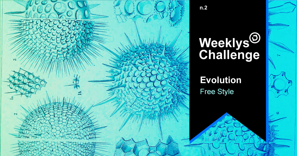 Evolution weeklys creativechain